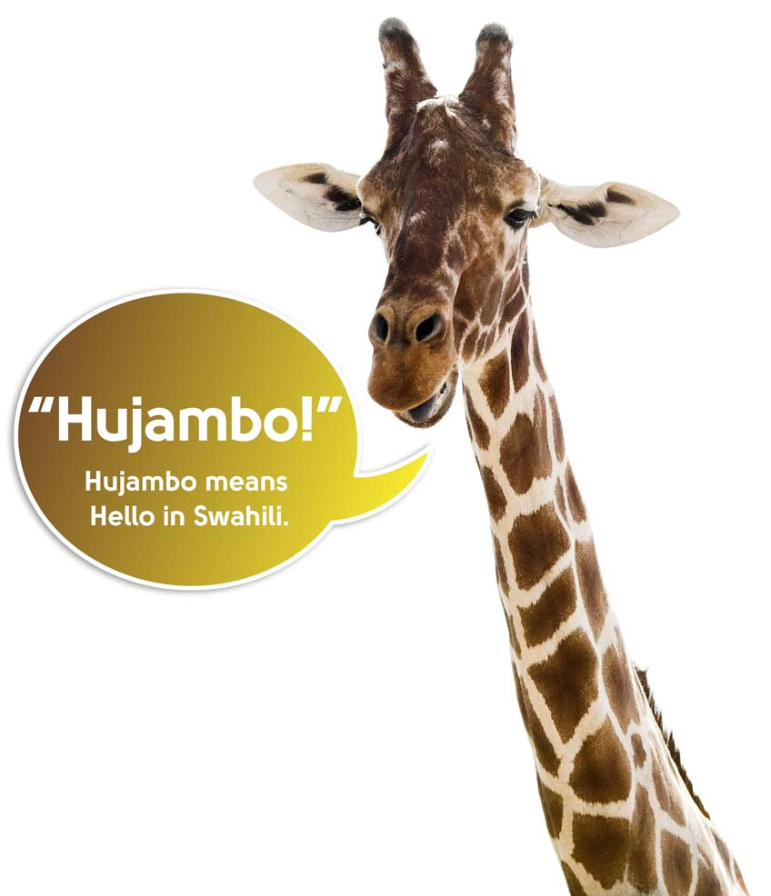 "A giraffe from Tanzania says Hujambo"" (""Hello"" in Swahili)."