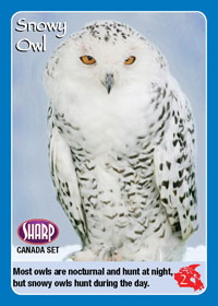Snowy Owl from the Canada set.